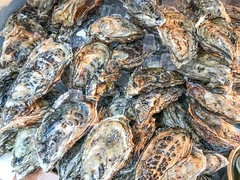 Fresh oysters kept with ice (DigiPub) Tags: gettyimages 1064429792 oyster かき 牡蛎 牡蠣 カキ 蠣 海鮮 浅草 東京
