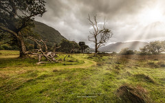 follow the way (ylemort) Tags: nature landscape mountain tree scenics grass cloudsky outdoors fog ruralscene sky meadow hill greencolor beautyinnature forest summer cloudscape travel environment everypixel canon canon5dmkiv ireland kerry
