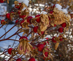 EmilyMunoz_theworldincolour_03 (littleemphoto) Tags: fall2018 idaho rexburg snow