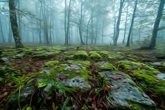 SANTIAGO LAIIÑOTSU4 ART (juan luis olaeta) Tags: paisajes landscape fog foggy forest basoa bosque hayedo pagoa tree nieblas laiñoa photoshop art