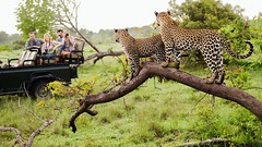 15 Things You Must Know Before Going on Safari in South Africa (katalaynet) Tags: follow happy me fun photooftheday beautiful love friends