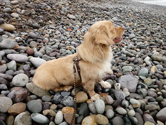 Lima - Costa Verde (Santiago Stucchi Portocarrero) Tags: miraflores lima perú roni mar playa perro can cane dog hund hound chien
