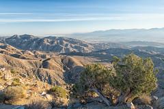 untitled (94 of 125).jpg (xen riggs) Tags: desert california joshuatreenationalpark february2018
