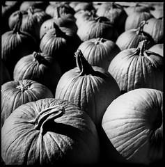 img420 (Jurgen Estanislao) Tags: still life pumpkin halloween art analog film vintage photography black white hasselblad 500 cm carl zeiss planar t 80mm f28 ilford hp5 plus kodak hc110 g