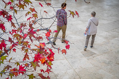 Sasha and Louise (Robert Borden) Tags: getty thegetty thegettycenter losangeles la socal california southerncalifornia 50mm 50mmlens fuji fujifilmxt2 fujiphotography candid perspective leaves color red