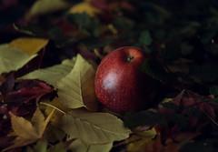 Autumn Apple (Jackx001) Tags: 2018 canada chinesemaple contentcreator jacknobre october ontario original photography studio toronto originalcontent autumn apple still life details