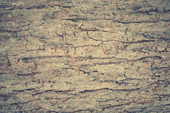 Bark Wood Texture (Thành Hoàng Nguyễn) Tags: abstract antique backdrop background bark board brown carpentry closeup decor decoration decorative design floor forest grain grunge hardwood home interior line lumber material natural nature nobody oak old orange organic panel pattern pine plank rough seamless striped structure surface table texture timber tree trunk veneer vintage wall weathered wood wooden