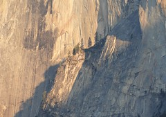 """Detail of Half Dome at """"magic hour"""" (Ruby 2417) Tags: yosemite half dome cliff rock scenery nature landscape detail tree granite sunset alpenglow"""