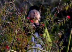 The Birder (MPnormaleye) Tags: birdwatching birdwatcher birder hiking nature trees bushes garden utata lensbaby seeinanewway portrait candid