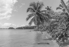 Samana, République Dominicaine - 9681 (rivai56) Tags: samana républiquedominicaine 9681 plage et palmiers en noir blanc beach palm trees black white