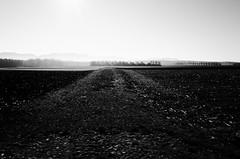 Black field (stefankamert) Tags: landscape field black sun sky trees light fog stefankamert blackandwhite blackwhite noiretblanc noir ricoh ricohgr gr grii grain autumn