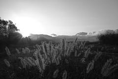 Spell (fordécoll) Tags: 2018 niigata japan autumn earlymorning dawn morninghaze monochrome sigma dp2q quattro foveon x3 drops