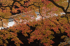 Shin-nyo-do,Sakyoku,Kyoto (yopparainokobito) Tags: shinnyodo 真如堂 真正極楽寺 京都 kyoto autumnleaves autumncolors 紅葉 canon eosm3 eos m3 efs1855mm13556isstm efs 1855mm f3556 is stm