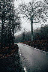 before the snow (robert.lindholm87) Tags: canon zeiss 35mm wideangle nature road tree asphalt sweden handhold winter lightroom wallpaper gloomy sky milvus