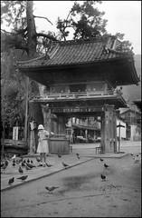 Feeding Doves in Miyajima (Wolfgang Wiggers) Tags: vintage japan 日本 miyajima 宮島 girl doves 鳩 1930s
