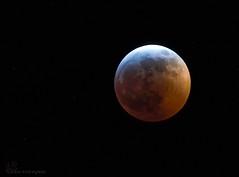 Super Blood Wolf Moon! (Estrada77) Tags: moon lunareclipse northern illinois kanecounty nightphotography nikon nikond500200500mm nature jan2019