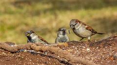 _DSC0419 (johnjmurphyiii) Tags: 06416 birds connecticut cromwell originalnef shelly tamron18400 usa wildlife winter yard johnjmurphyiii