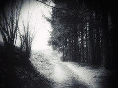 leading lights (undefinable moods) Tags: blackwhite bnw bw branches trees forest woods wald way path light shadow bench dark darkart leading endoftheroad