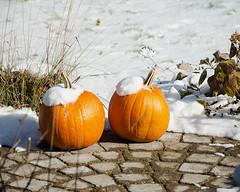 Frost is On the Pumpkins (Mark...L) Tags: pumpkins snow winter
