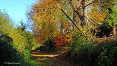Automne (claude 22) Tags: couleurs color colours automne automn bretagne france brittany armor argoat jaudy rochederrien bois arbre arbres trees