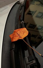 Autumn is coming to town (simone781) Tags: leaves golden autumn winter glass car verona
