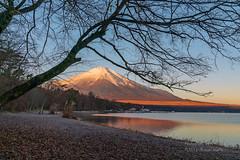 (yamanaito) Tags: flickr αcafe fujisan fujiyama mtfuji lake yamanakako yamanashi japan landscape morning autumn mountain
