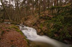 Río Canencia. (Amparo Hervella) Tags: canencia comunidaddemadrid españa spain río agua paisaje árbol naturaleza bosque largaexposición d7000 nikon nikond7000