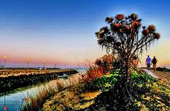 Até à praia... (Zéza Lemos) Tags: praia portugal pordesol puestadelsol rio água algarve areia amizade plantas dunas vilamoura mar aves barcos pesca faro