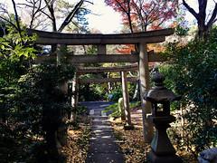 tori gate of a writer kami shrine (deziluzija) Tags: japanesegarden koyo nezumuseum toriigate