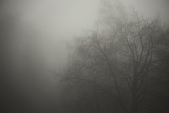 Morning Fog (just.Luc) Tags: monochrome monochroom monotone tree arbre boom baum winter hiver albero árbol fog mist brouillard nebbia niebla nevel nebel nature natuur gaia ruisbroek puurs vlaanderen flandres flanders belgië belgien belgique belgium belgica