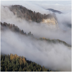 Morning Light (Dieter Voegelin) Tags: forest trees fog landscape baselland bölchen belchen sony tree herbst autumn