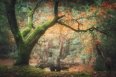 Sunday in the forest (xkolba) Tags: tree misty scenery autumn foggy mist forest morning trees fog outdoor landscape podlasie poland wood grass leafs
