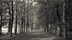 Autumn in black & white (LuckMaster) Tags: black white blackandwhite blackwhite wood woods forest bos woud zwartwit zwart wit mono monochrome hike hiking wandelen wandeling netherlands thenetherlands holland sunday zondag dutch nederlands canon