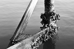 Entropy (robert.babnick) Tags: marina wood calm morning still blackandwhite water peer 911memorial madierabeach rbcreativeimagesllc