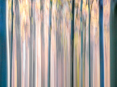 autumn walks (szélléva) Tags: icm abstract forest nature trees wood lines parallels blur