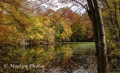 Pond in Autumn - Closter (moelynphotos) Tags: bergencounty fall autumn panoramic color midatlanticusa pond tree deciduoustree reflectionleaf fallen multicolored nonurbanscene beautyinnature nature naturecenter newjersey northamerica northeast park usa vibrantcolor moelynphotos