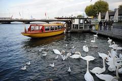 GENEVA (gabrielebettelli56) Tags: switzerland geneva ginestra svizzera lago lake swans cigni battello boat nikon