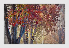 Finally (Christina's World!) Tags: trees nature autumn december sandiego red leaves fall neighborhood brightcolors textures painterly liquidambertree