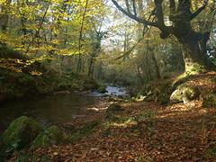 PARQUE DE UCIEDA (agustincordoba_g) Tags: otoño paisaje arboles arte agustin ucieda cantabria bosque