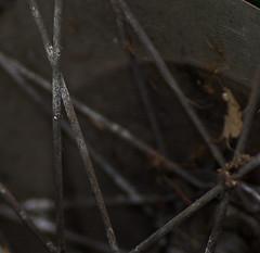 spokes (f8shutterbug) Tags: idb closeup spokes bicycle 81118in2018 tamron9028
