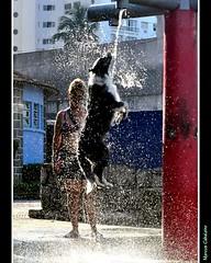 Bebendo Água Na Fonte Foto Marcus Cabaleiro Site: https://marcuscabaleirophoto.wixsite.com/photos Blog: http://marcuscabaleiro.blogspot.com.br/              IIOIIOIIOIIOIIOIIOIIOII #marcuscabaleiro #brasil #santos #BorderCollie #dog #color #baixadasantist (marcuscabaleiro4) Tags: brazil composição color banho baixadasantista cor melhoramigodohomem brasil imagem inteligência cão fotografia arte nikon bordercollie cores foto marcuscabaleiro chuveiro photographer dog coresdobrasil photography santos