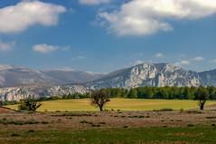 Le Plateau de Valensole (Petoskey Drones) Tags: fields trees montagne provence ciel nuages champs mountains