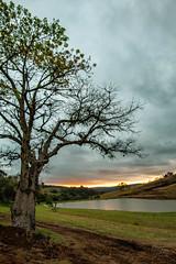 Sunset - tree (Enio Godoy - www.picturecumlux.com.br) Tags: rokinon2812mm pardinhosp sonyalpha viveza2 tree niksoftware lake sky sony sony03 sunset sonyalpha6300 clouds