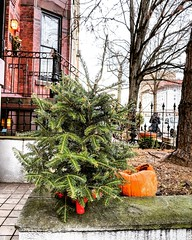 holidays past (ekelly80) Tags: dc washingtondc winter january2019 holidays past christmastree christmas halloween pumpkin