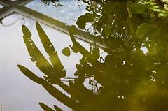 33970011 (Pomegranate_seeds) Tags: reflection eau water garden botanical analog 35mm photography photographers mine denmark travelling travel