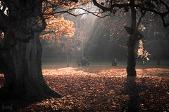 Lovers in the Park, Bath, UK (KSAG Photography) Tags: bath somerset uk england unitedkingdom britain city park autumn november 2018 nikon sunbeam trees europe unesco hdr
