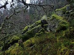 Mosegrodd Ur på Løvstakken (annettesvae) Tags: bergen norway moss mose stones nature mountain rain ur untouchednature rainforest coldrainforest aniceday