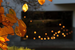 Autumn lights (Behappyaveiro) Tags: outono autumn autumncolours autumnleaves folhasdooutono folhas leaves serralves porto portugal europa europe lights autumnlights luzesoutono bokeh