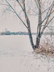 Coat of snow (Andrei Grigorev) Tags: landscape view snow tree bush leaves skyline lake nature winter vertical