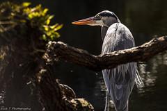 PhotoAdventures 12/18/18 (Nick R Thompson) Tags: florida wildlife park gator heron squrrel turtle whitecity